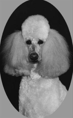 bordelhund2