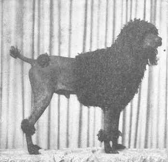 bordelhund3