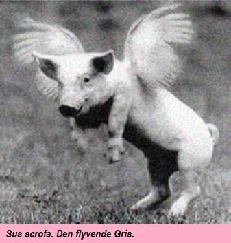 Gris03