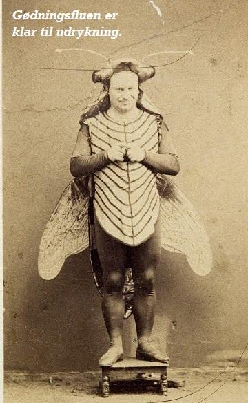 Gødningsfluen