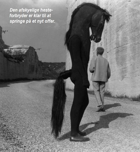 Heste-forbryder
