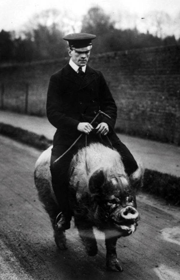 grise-rytter2