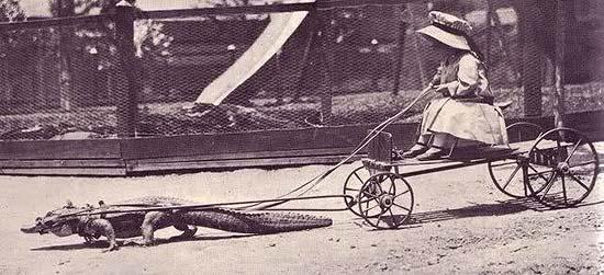 krokodilletæmmer