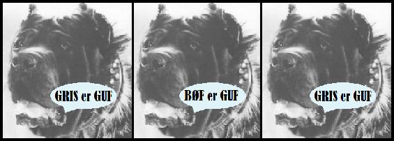 hunde mastiffs mad foder guf